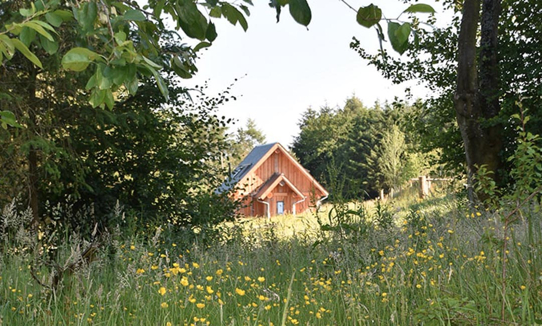 Fiddle Hill log home in meadow